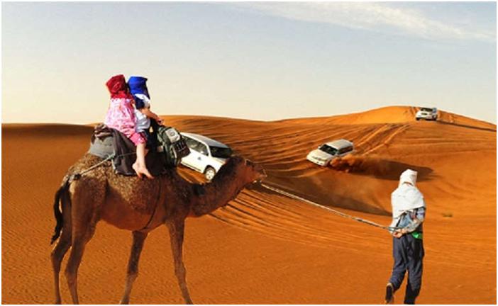 Morning camel Safaris in Dubai